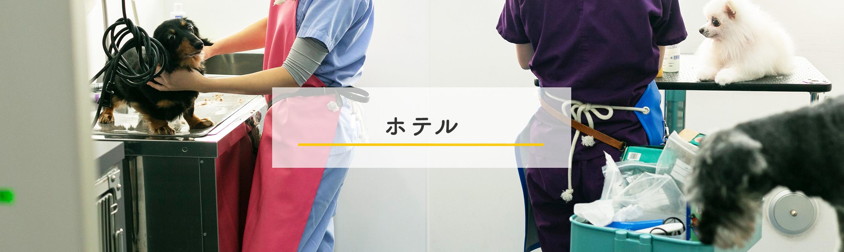 当動物病院のご案内
